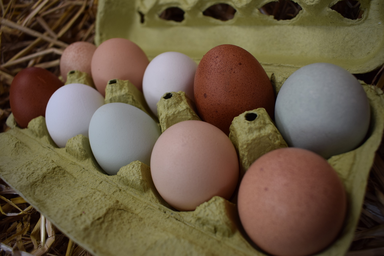 ein Eieranteil